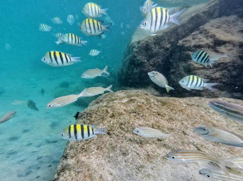 GoPro Hero 7 Silver Underwater Photo test