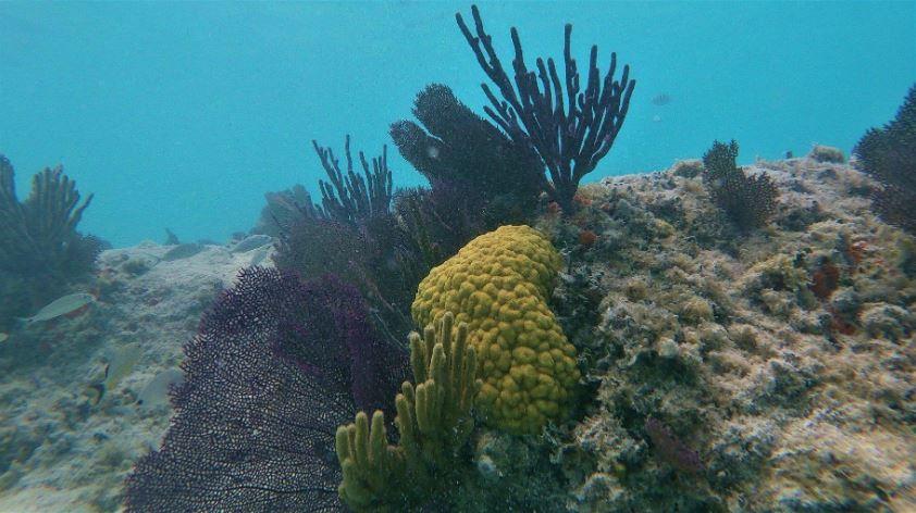 GoPro Hero7 White Photo quality underwater