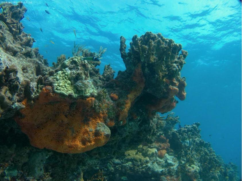 Campark X30 Photo Underwater Quality